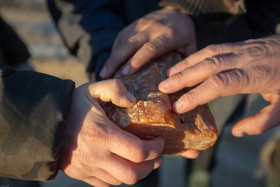 În căutarea chihlimbarului, aurul baltic - Ordinea Zilei