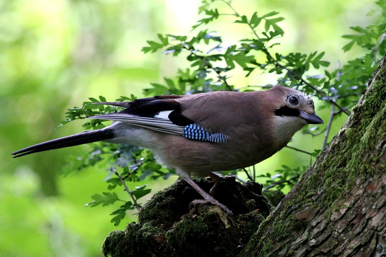 Păsări supărate rio -